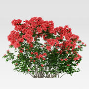 Azalea Shrub (Rhododendron) 3d model