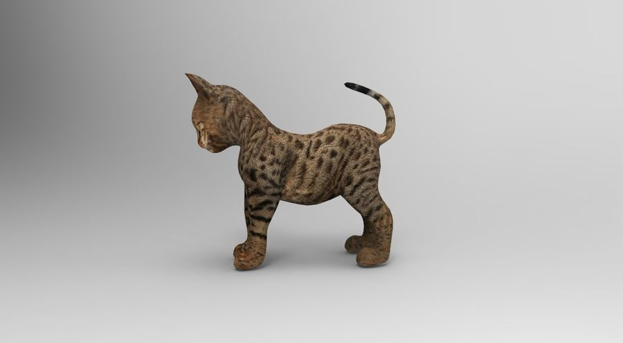 cute cat rigged royalty-free 3d model - Preview no. 18