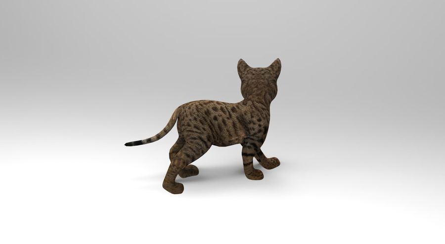 cute cat rigged royalty-free 3d model - Preview no. 5