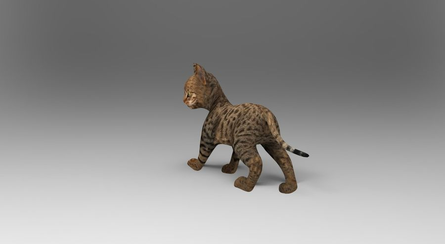 cute cat rigged royalty-free 3d model - Preview no. 3