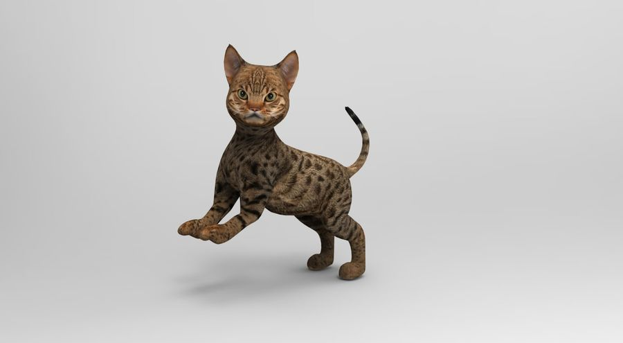 cute cat rigged royalty-free 3d model - Preview no. 21