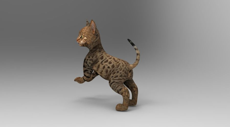 cute cat rigged royalty-free 3d model - Preview no. 22