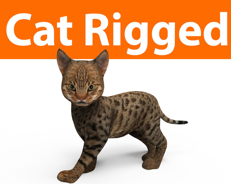 cute cat rigged royalty-free 3d model - Preview no. 1
