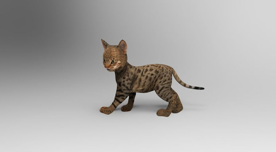 cute cat rigged royalty-free 3d model - Preview no. 2