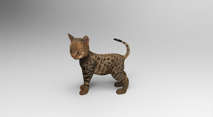 cute cat rigged royalty-free 3d model - Preview no. 14