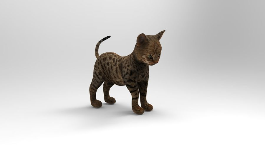 cute cat rigged royalty-free 3d model - Preview no. 15