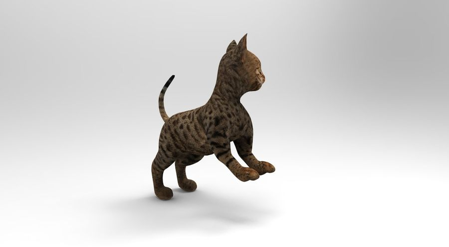 cute cat rigged royalty-free 3d model - Preview no. 25