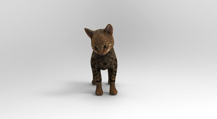 cute cat rigged royalty-free 3d model - Preview no. 19