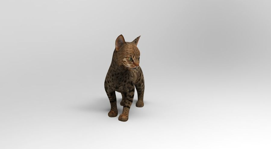 cute cat rigged royalty-free 3d model - Preview no. 8