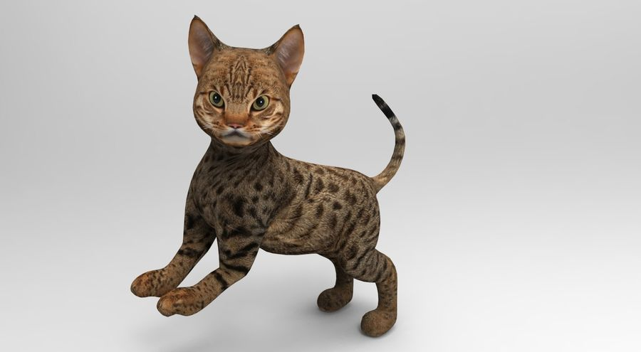 cute cat rigged royalty-free 3d model - Preview no. 28