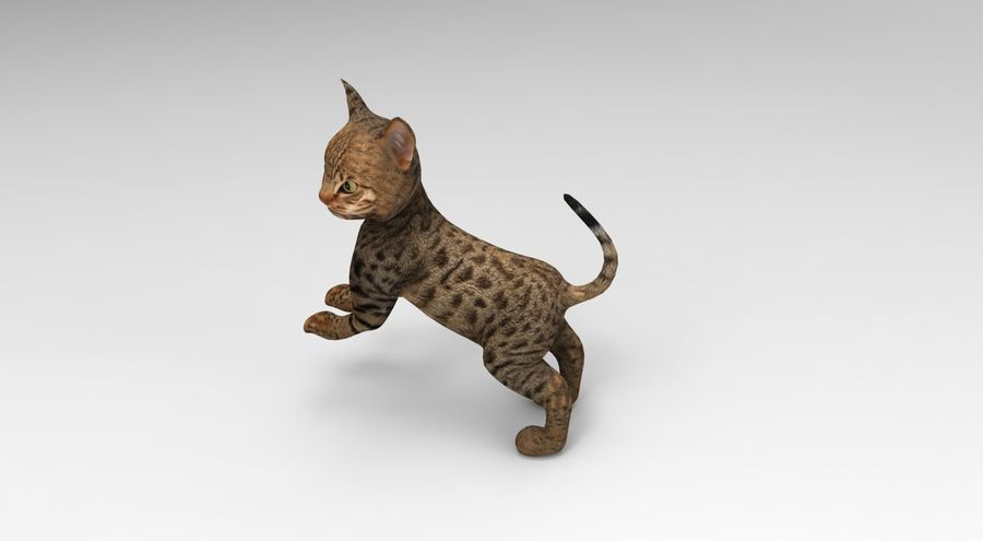 cute cat rigged royalty-free 3d model - Preview no. 27