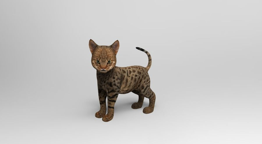 cute cat rigged royalty-free 3d model - Preview no. 9