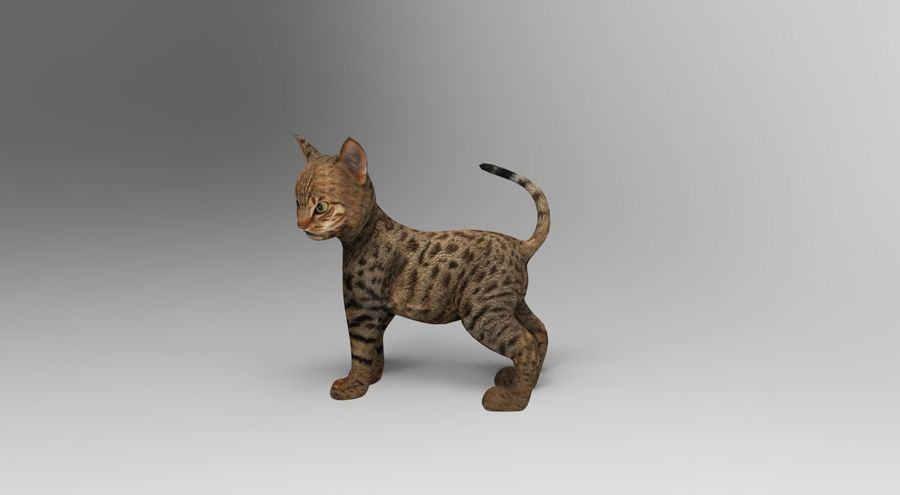 cute cat rigged royalty-free 3d model - Preview no. 10