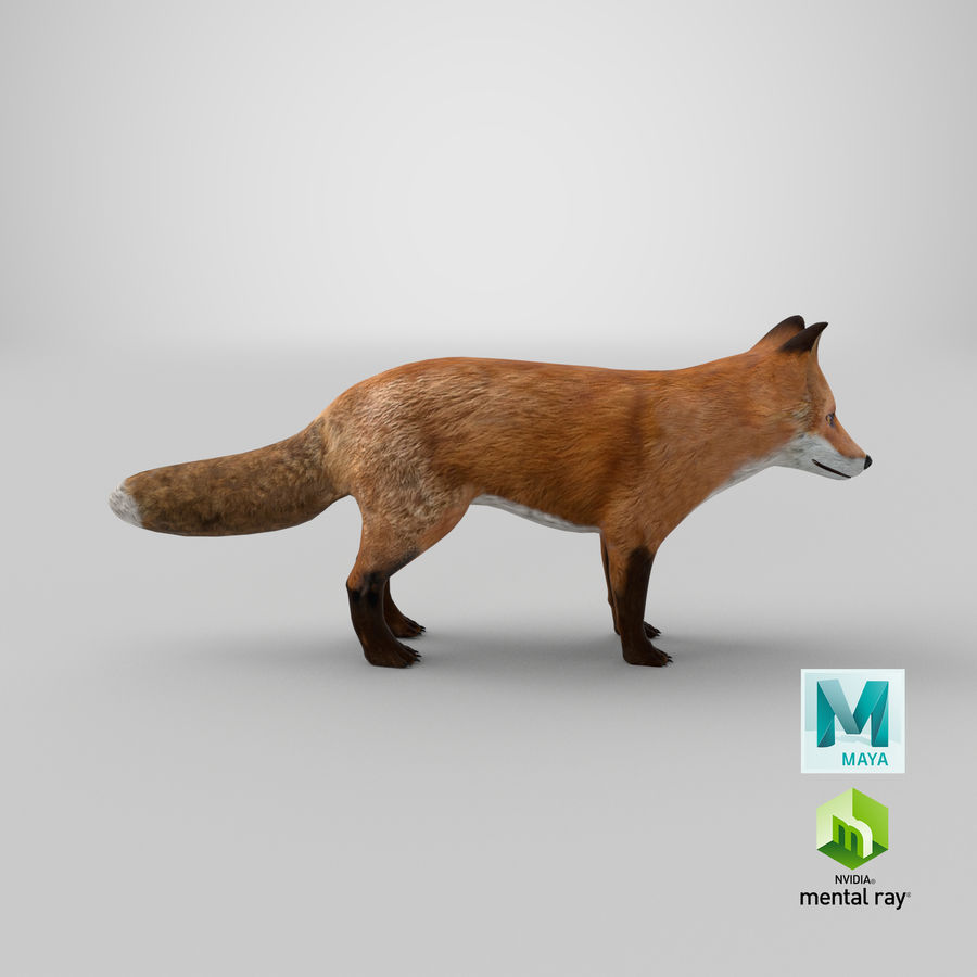 Fox royalty-free 3d model - Preview no. 15