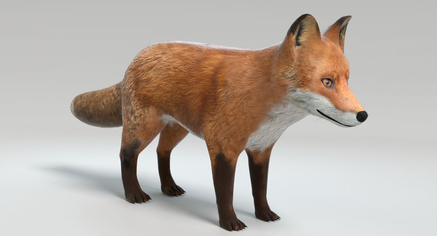 Fox royalty-free 3d model - Preview no. 4