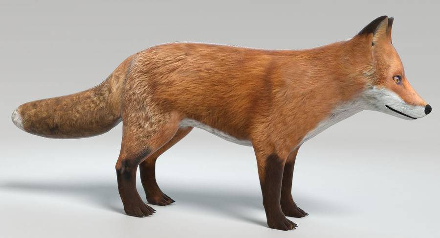 Fox royalty-free 3d model - Preview no. 3