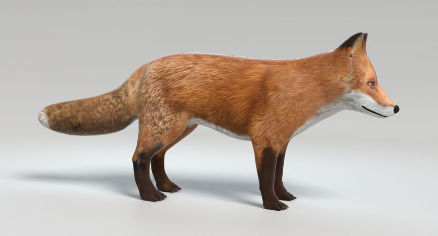 Fox royalty-free 3d model - Preview no. 5