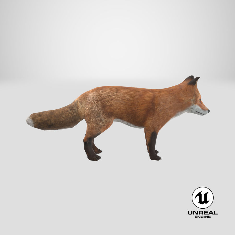 Fox royalty-free 3d model - Preview no. 19