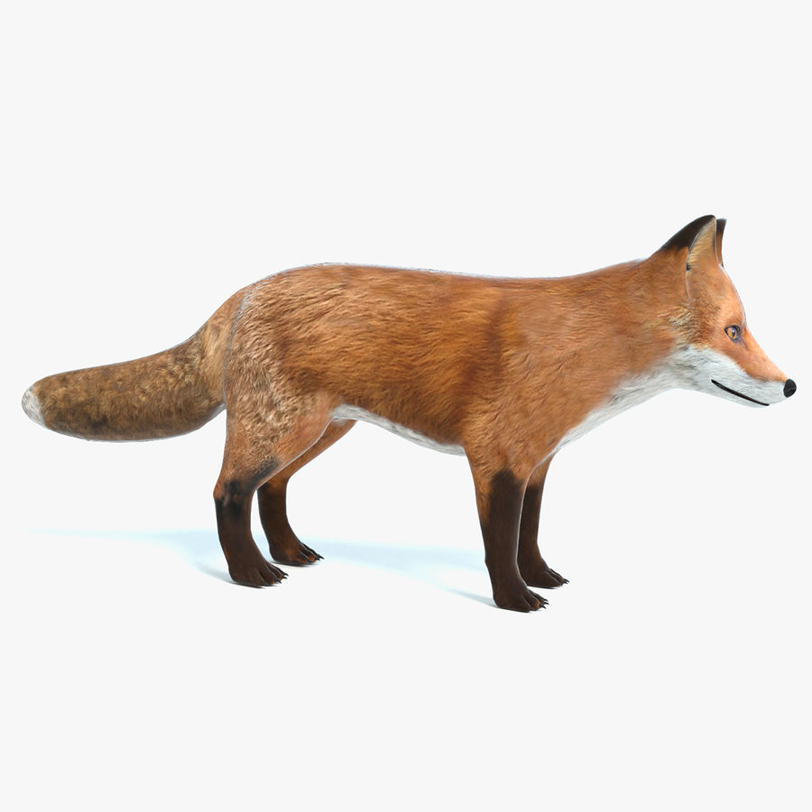 Fox royalty-free 3d model - Preview no. 1