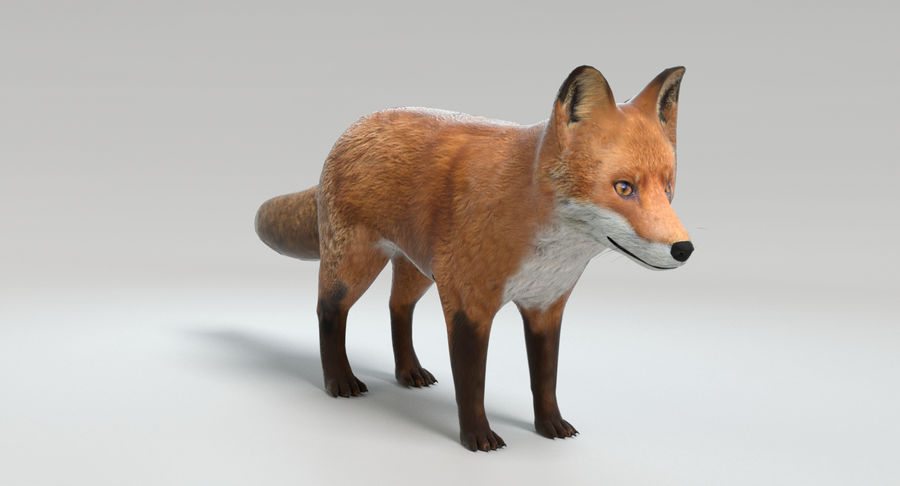 Fox royalty-free 3d model - Preview no. 10