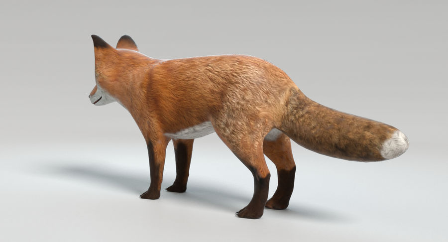 Fox royalty-free 3d model - Preview no. 7