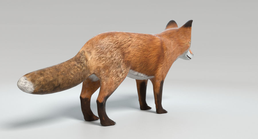 Fox royalty-free 3d model - Preview no. 6