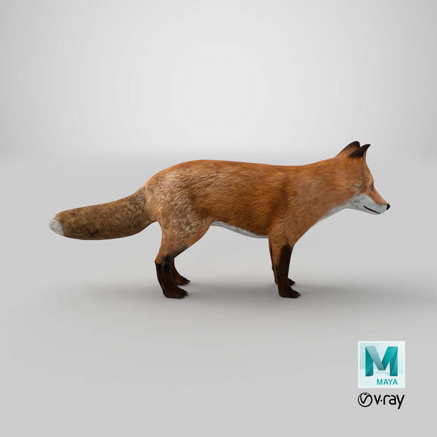 Fox royalty-free 3d model - Preview no. 14