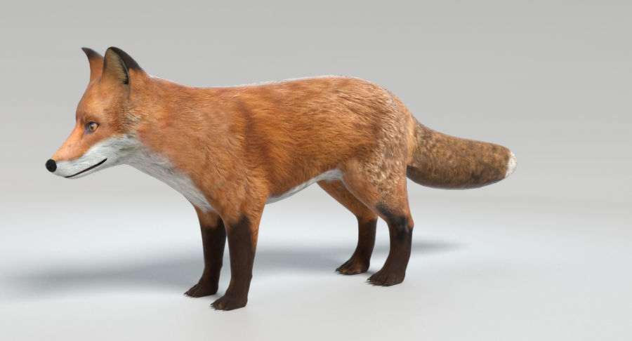 Fox royalty-free 3d model - Preview no. 8