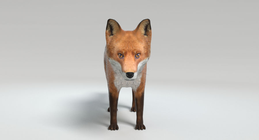 Fox royalty-free 3d model - Preview no. 9