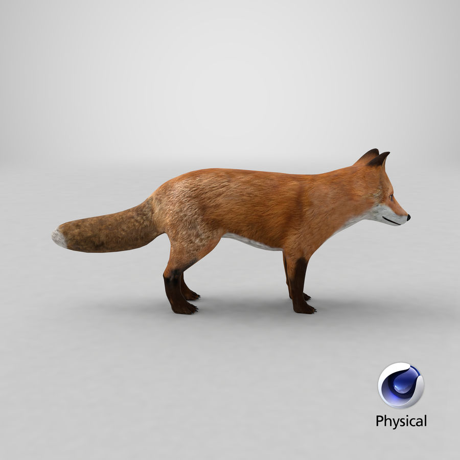 Fox royalty-free 3d model - Preview no. 18