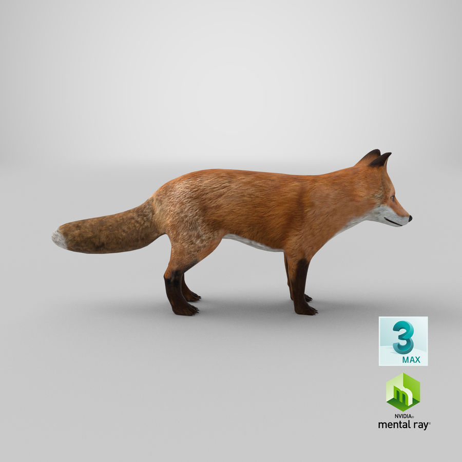 Fox royalty-free 3d model - Preview no. 17