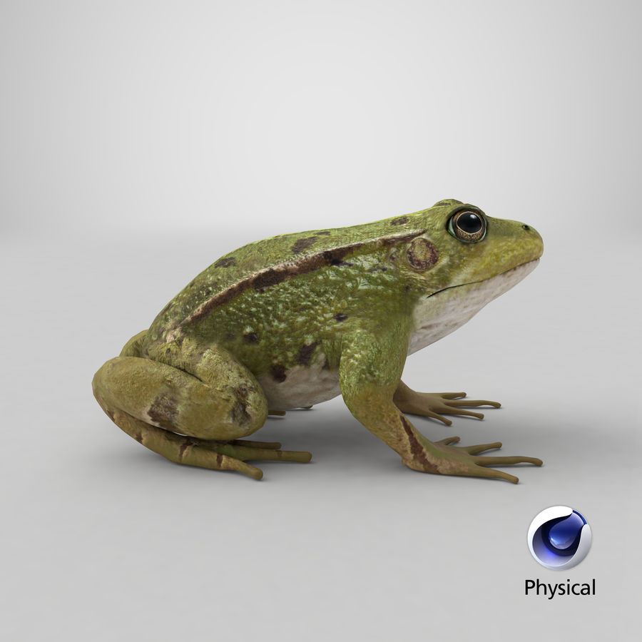 Frog royalty-free 3d model - Preview no. 16