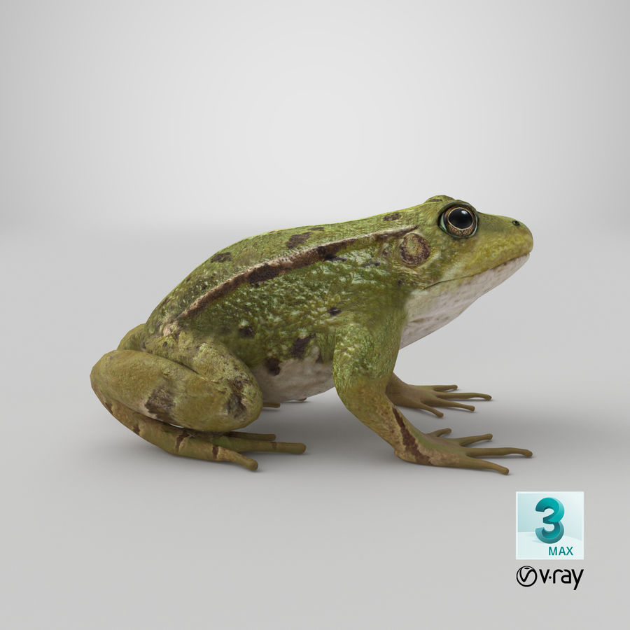 Frog royalty-free 3d model - Preview no. 14