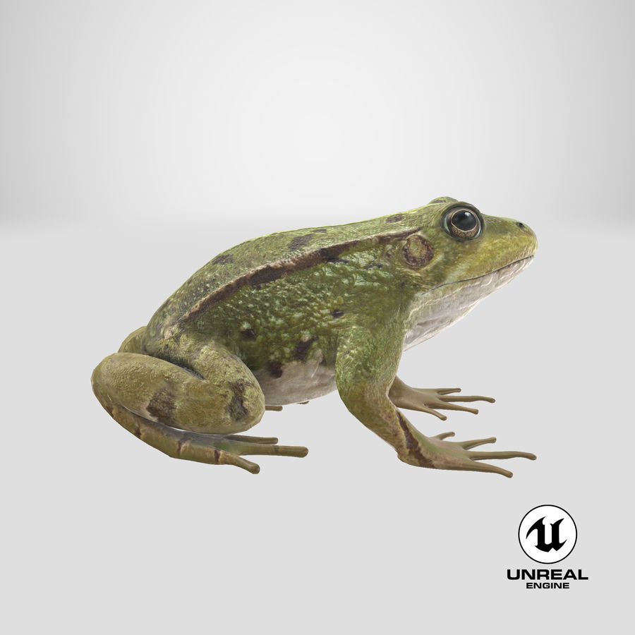 Frog royalty-free 3d model - Preview no. 17