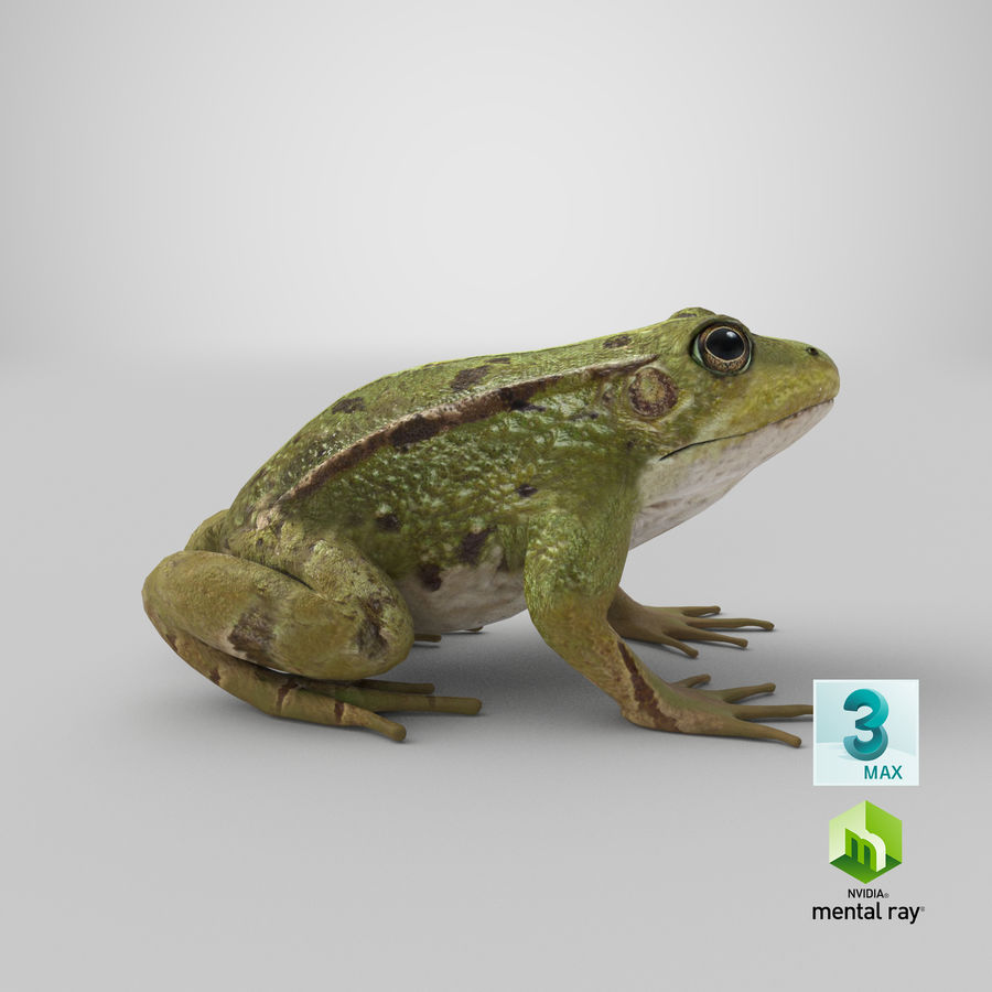 Frog royalty-free 3d model - Preview no. 15