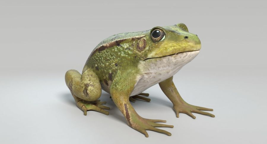 Frog royalty-free 3d model - Preview no. 9
