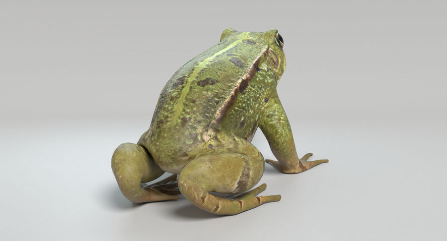 Frog royalty-free 3d model - Preview no. 5
