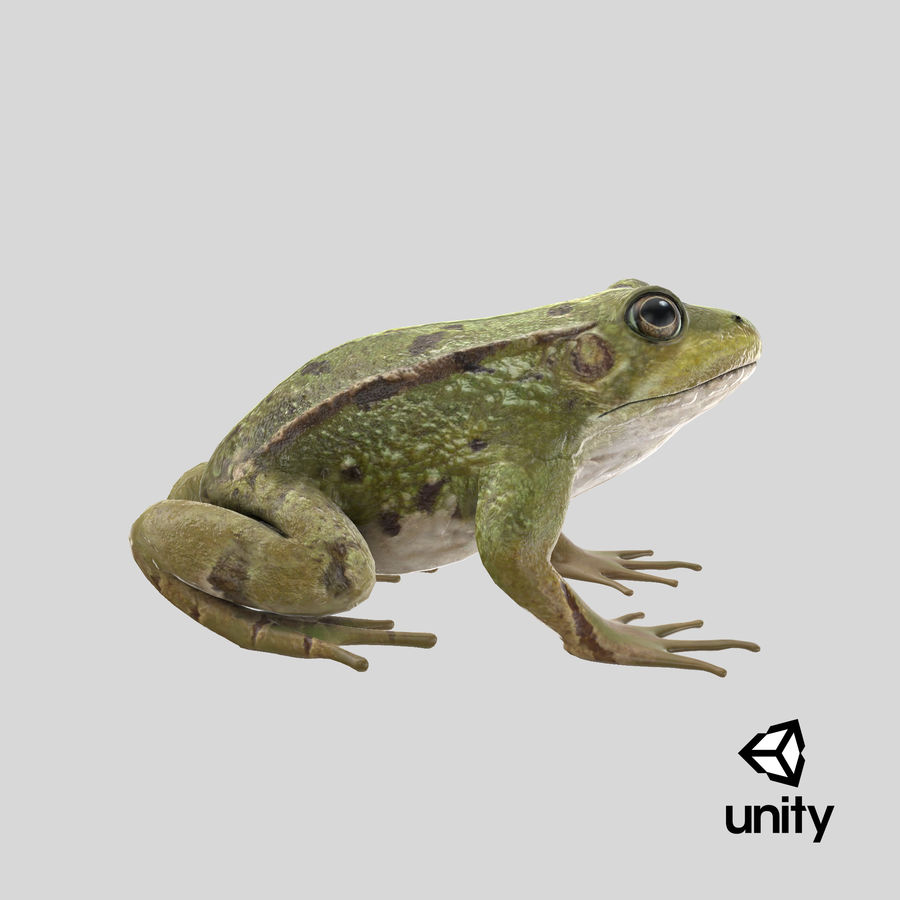 Frog royalty-free 3d model - Preview no. 18