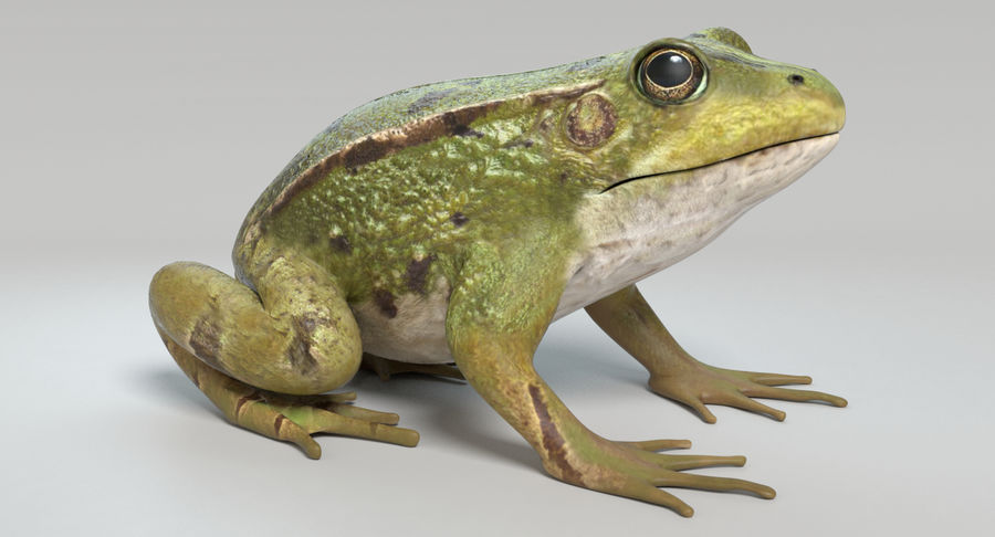 Frog royalty-free 3d model - Preview no. 3