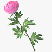 peony pink 3d model