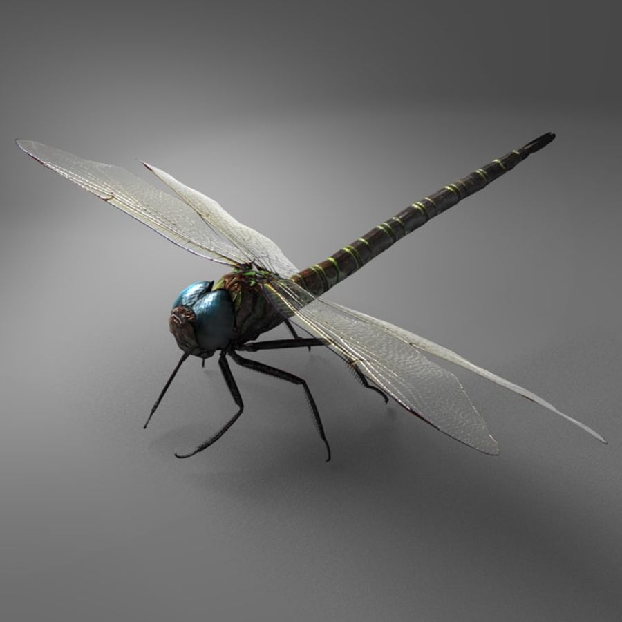 Dragon Fly royalty-free 3d model - Preview no. 23