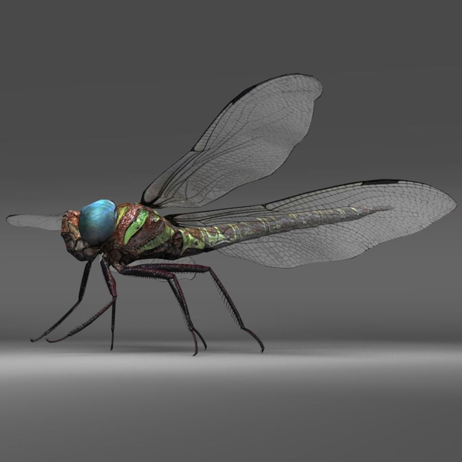 Dragon Fly royalty-free 3d model - Preview no. 1