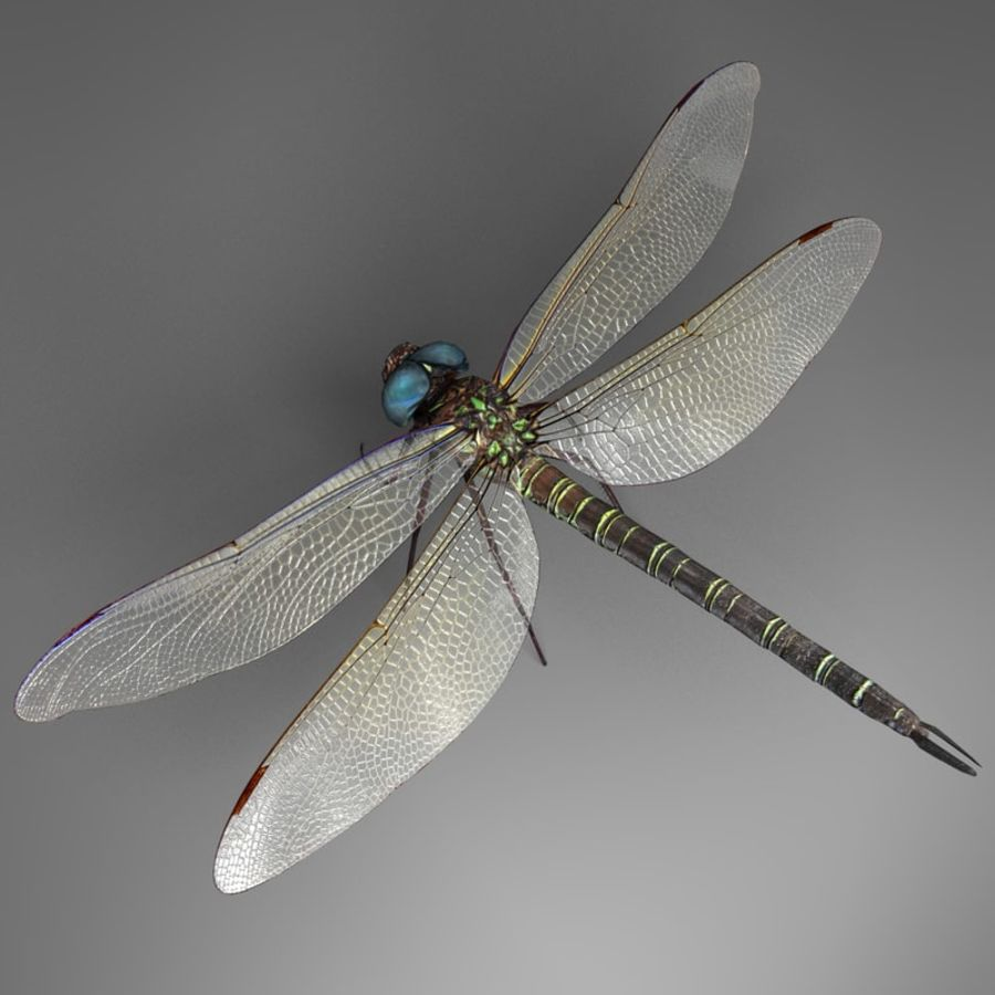 Dragon Fly royalty-free 3d model - Preview no. 7