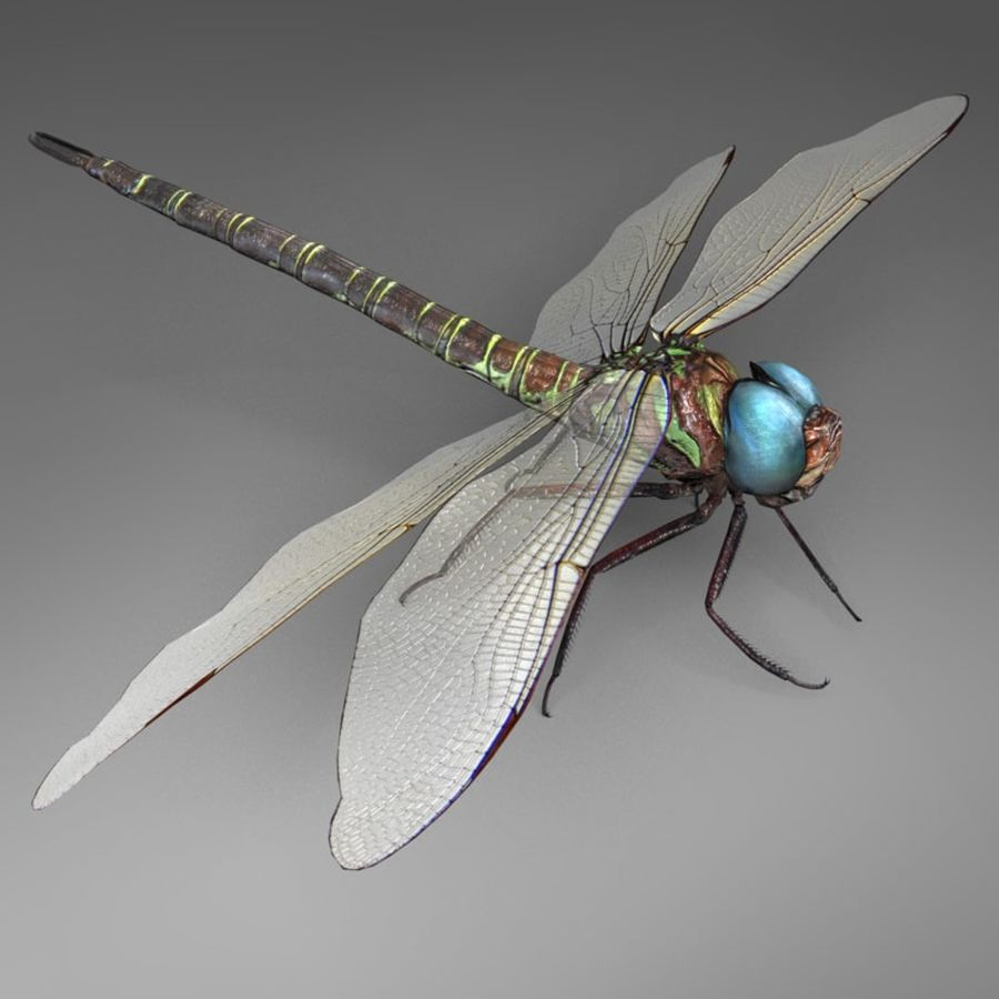 Dragon Fly royalty-free 3d model - Preview no. 3