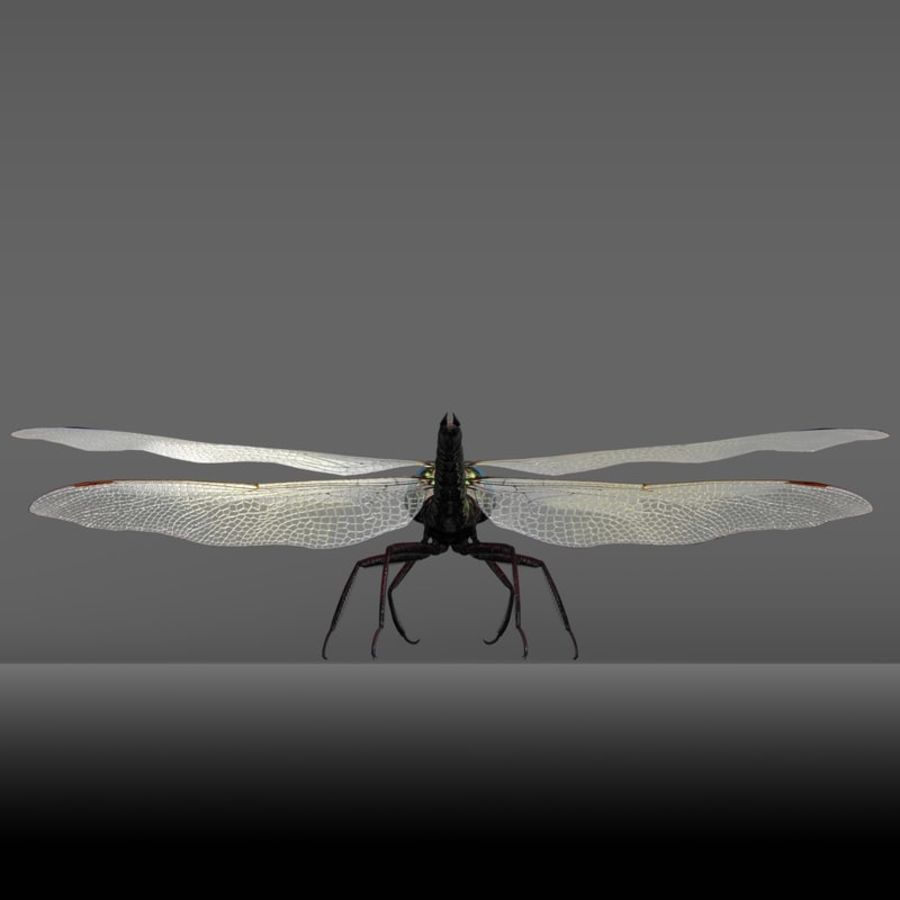 Dragon Fly royalty-free 3d model - Preview no. 21