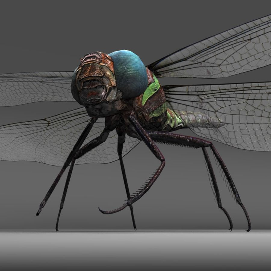 Dragon Fly royalty-free 3d model - Preview no. 11