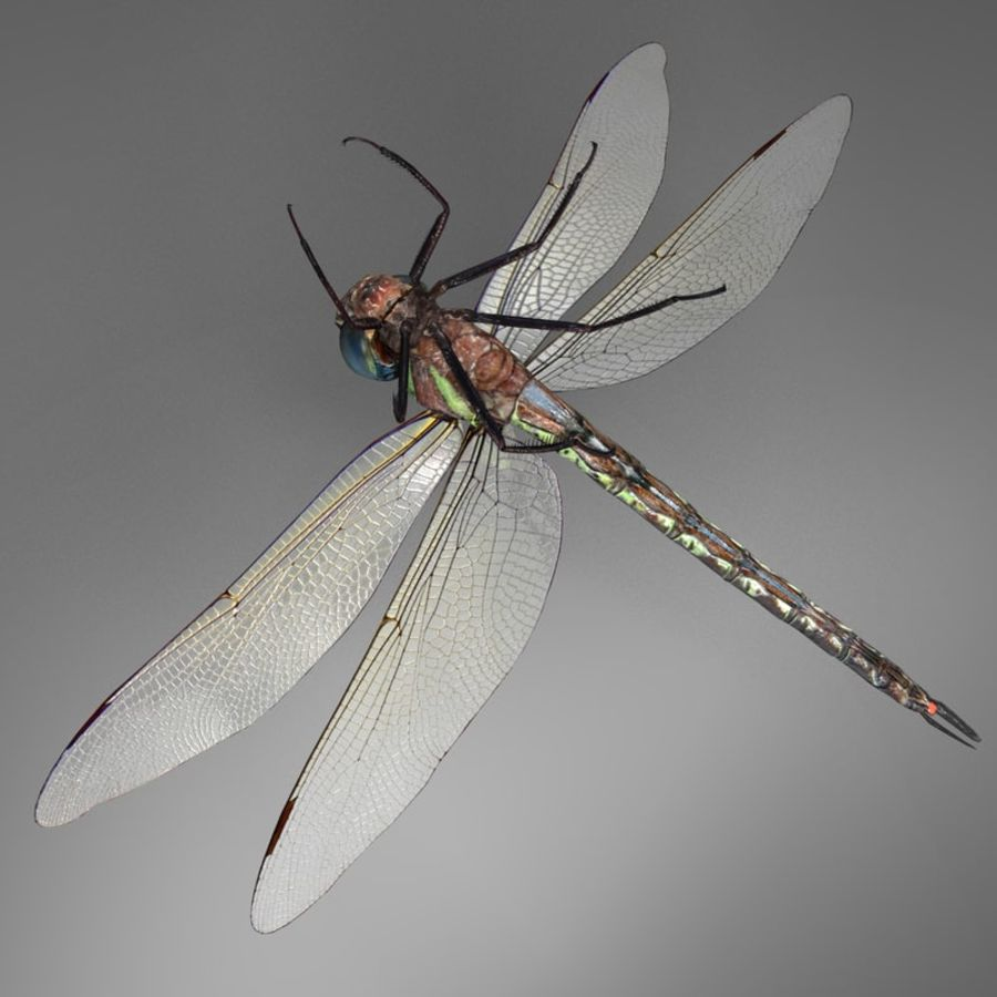 Dragon Fly royalty-free 3d model - Preview no. 9