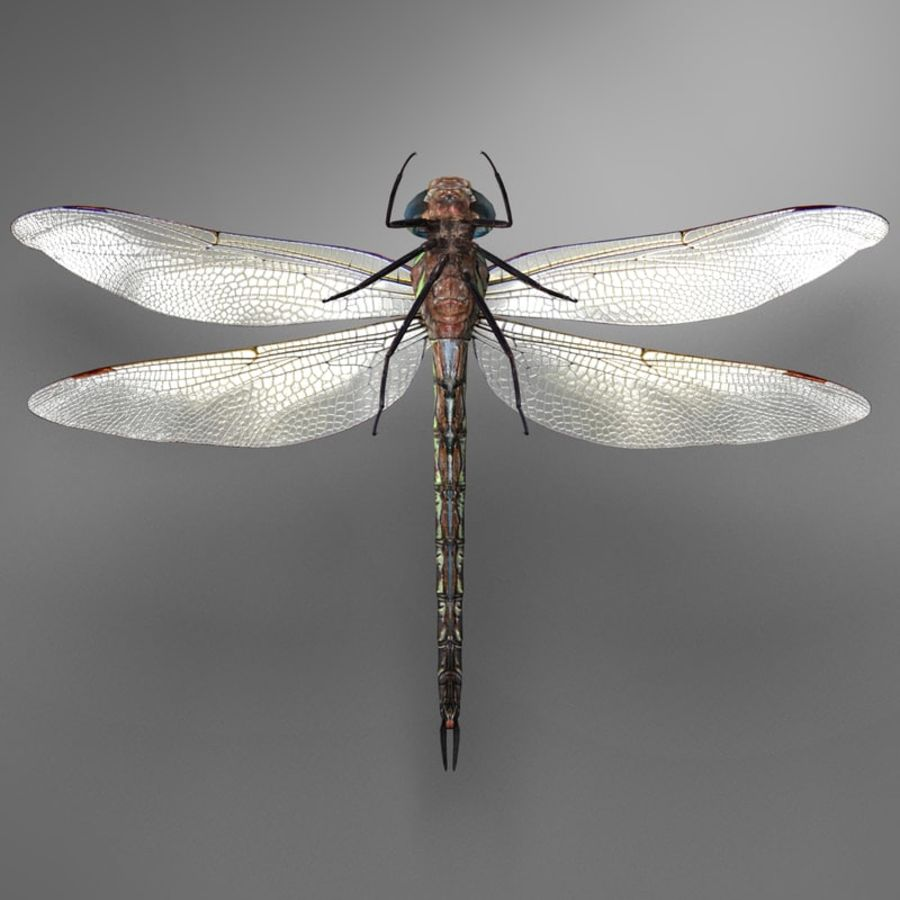 Dragon Fly royalty-free 3d model - Preview no. 19