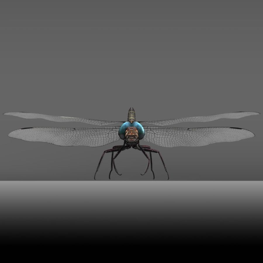 Dragon Fly royalty-free 3d model - Preview no. 15