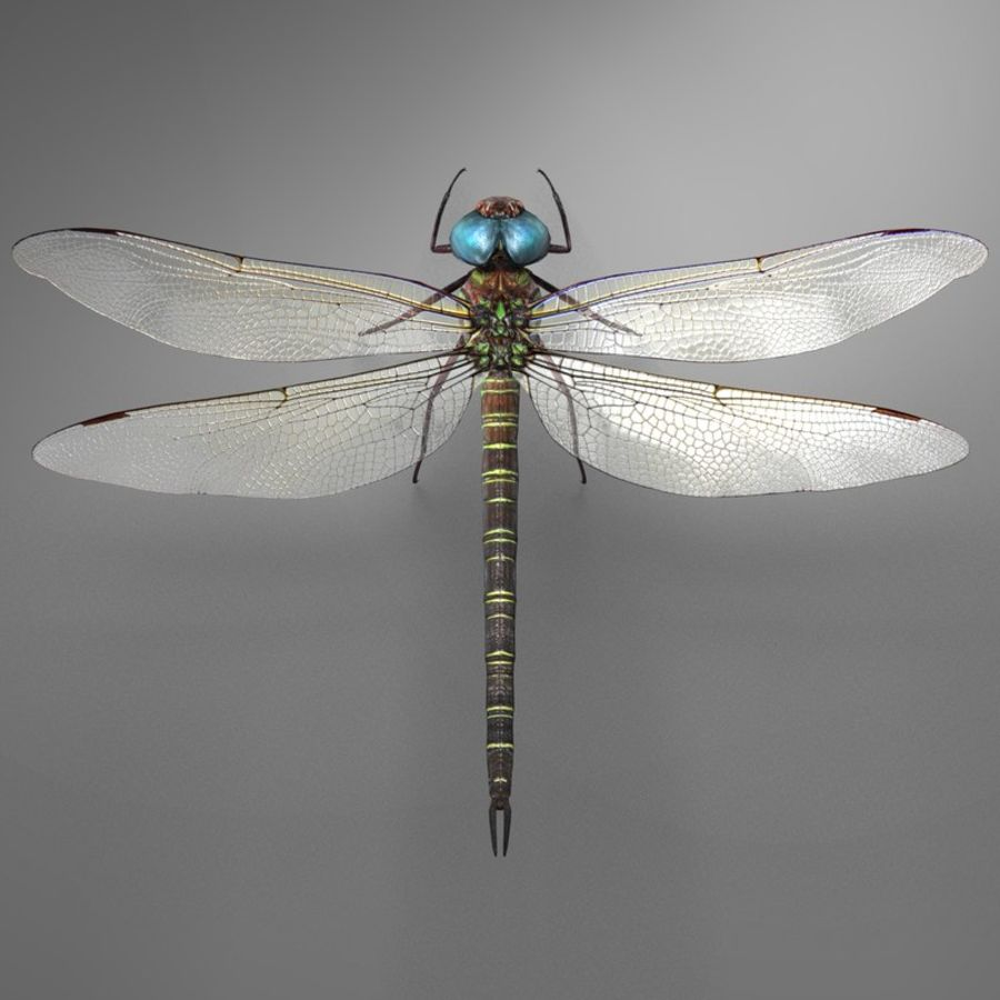 Dragon Fly royalty-free 3d model - Preview no. 17